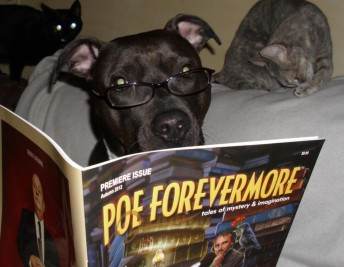 Poe - dog reads Poe Forevermore